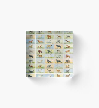 50 Colourful illustrations of dogs Acrylic Block