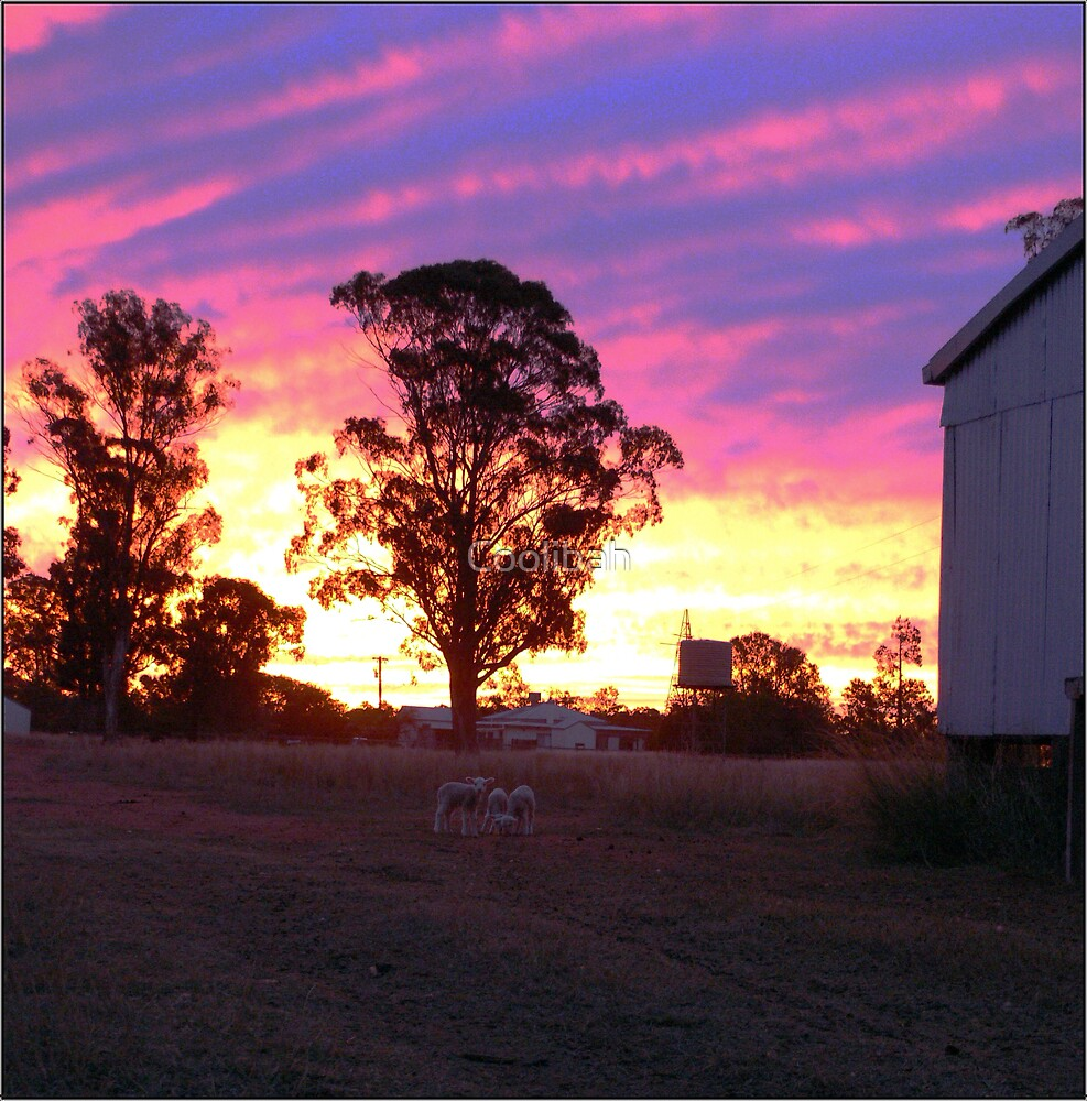 Pink Sky at Night Shepherds Delight by Ruth Anne  Stevens