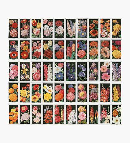 Set of 50 flowers Photographic Print