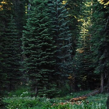 Hugging in the Meadow of Sequoia by HeavenOnEarth