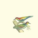 Blue-Throated Bee Eater - Bird Illustration by Hannah Sterry