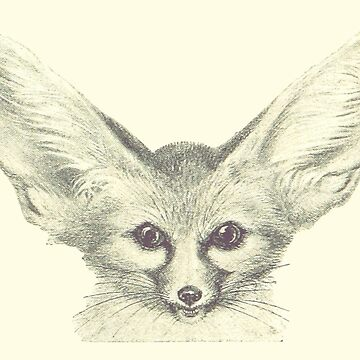 Fennec Fox - Cute Vintage Illustration by HannahSterry