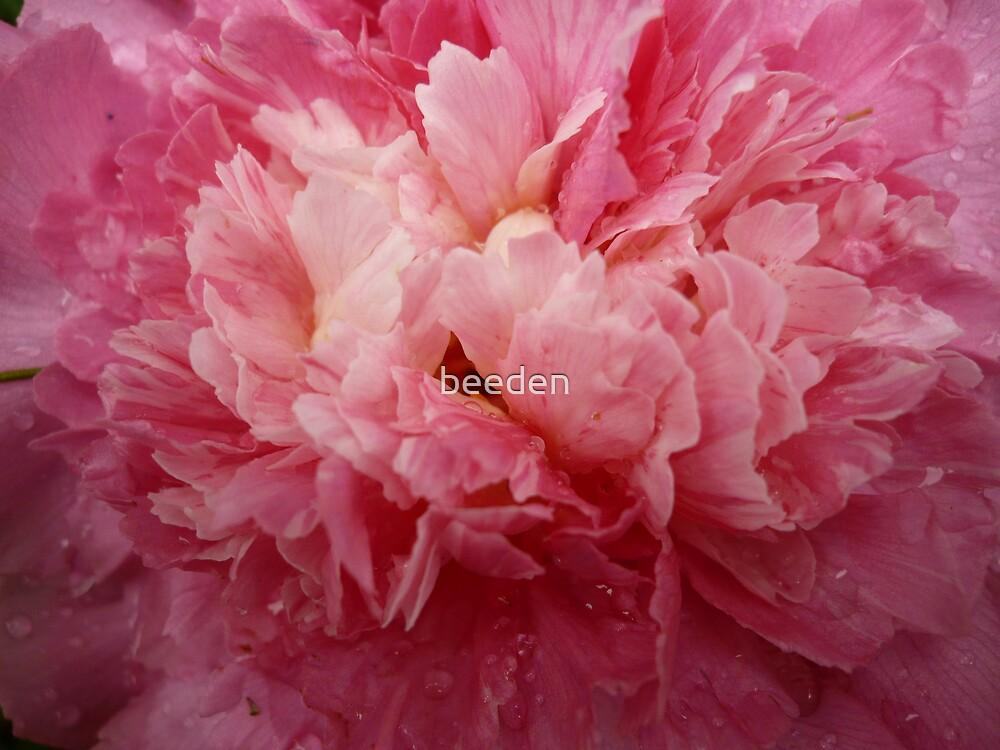 Camellia 3-2 by beeden