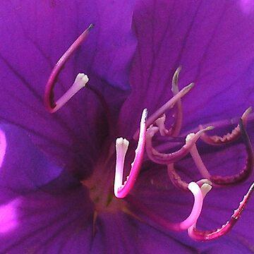 Stamen.... Antlers.... by KristenJoy