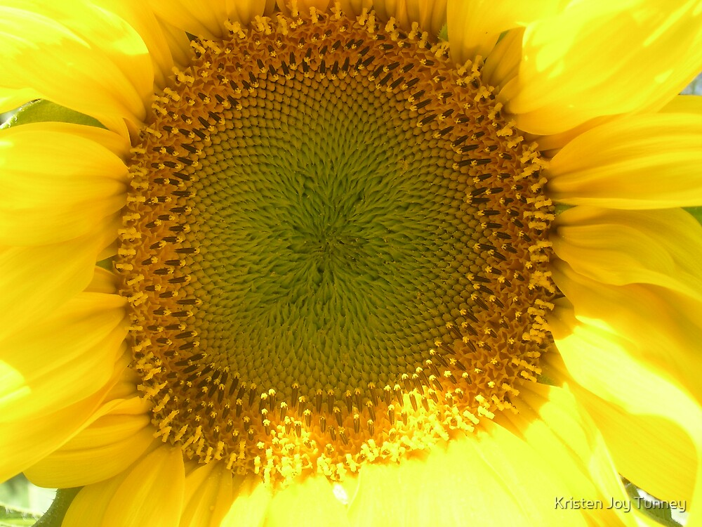 Sunflower Corona by Kristen Joy Tunney