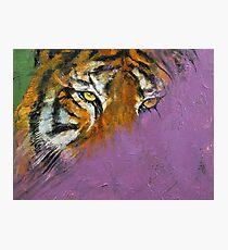 Shadow Tiger Photographic Print
