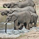 AT THE WATERHOLE - THE AFRICAN ELEPHANT – Loxodonta africana by Magriet Meintjes