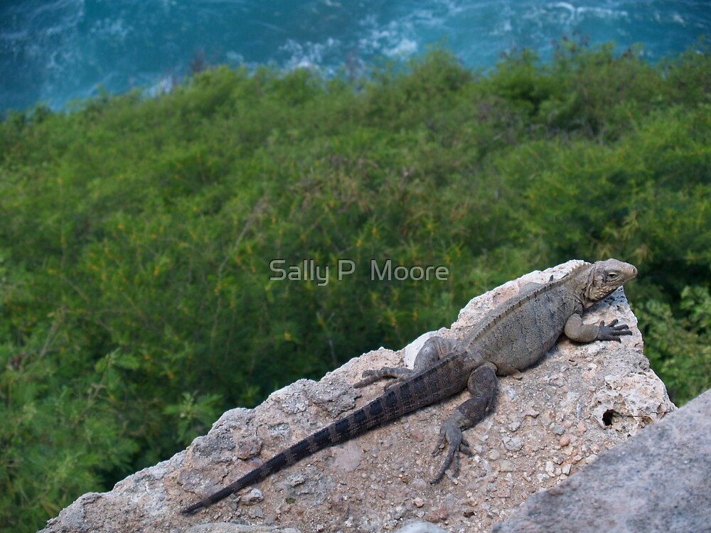 Lazy Lizard by Sally P  Moore