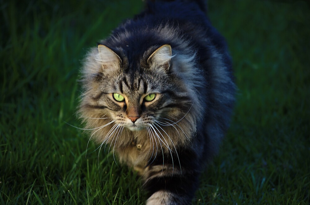 On the prowl by David  Hall