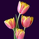 Four Tulips On Purple by hurmerinta