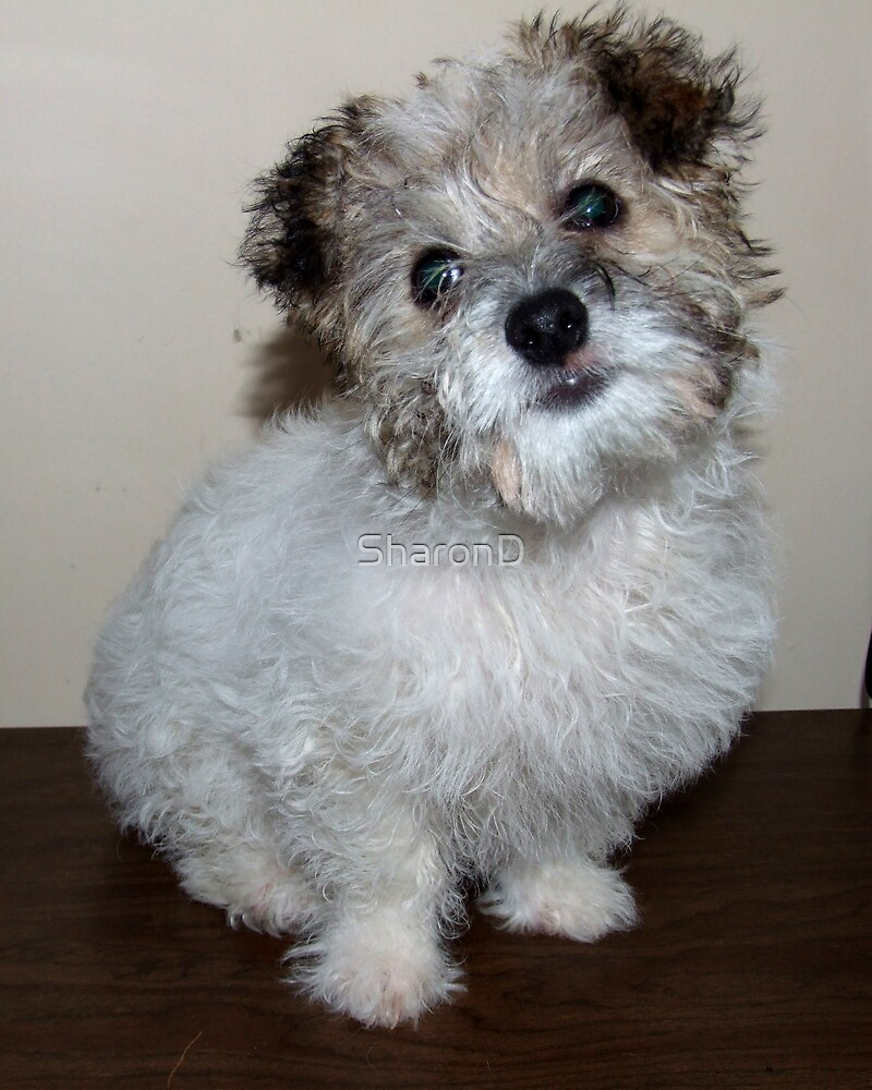 Lookin Good- Millie After The bath 02 by SharonD
