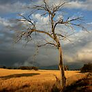 dead tree /clearing storm by Miriam Shilling