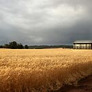 wheat field /clearing storm by Miriam Shilling