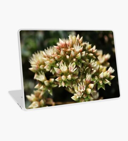 Stages OF Nature Laptop Skin