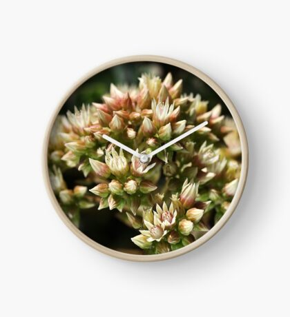 Stages OF Nature Clock