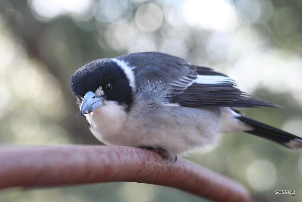 Butcher Bird by sassey
