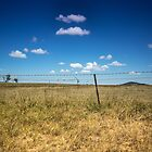 Goldenes Gras und blaue Himmel von Clare Colins