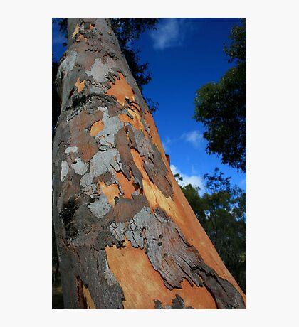 Tree Skin Photographic Print