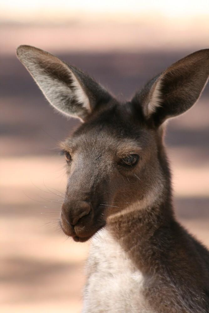 Kangaroo at Flinders by Justine Coady