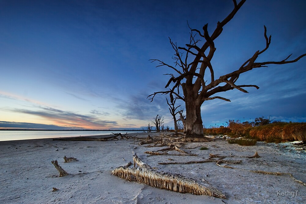 Rugged Beauty by KathyT