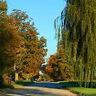 Country road by cherylc1