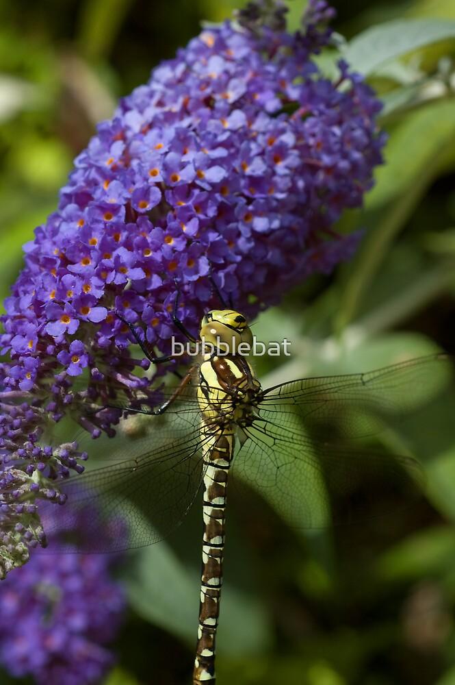 Dragonfly on a Buddleia 1 by bubblebat