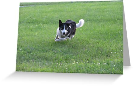 I'll Get That Ball! by Tammy F