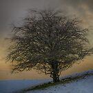 Winter Tree  by Glen Allen