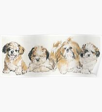 Shih Tzu Puppies Poster
