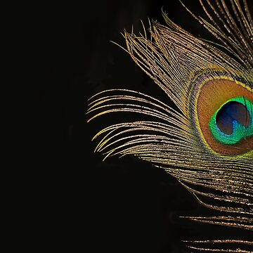 Peacock Feather Still Life by LisaKnechtel