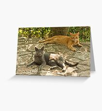 Alys and Tigre in tuscany Greeting Card