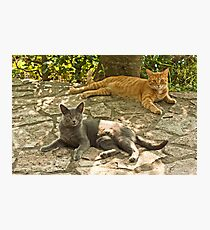 Alys and Tigre in tuscany Photographic Print