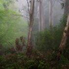 Mystical - Mount Wilson NSW by Philip Johnson