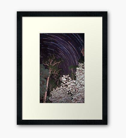 Star trails in tall eucalypt forest Framed Print