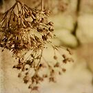 Japanese Maple Buds by kellym