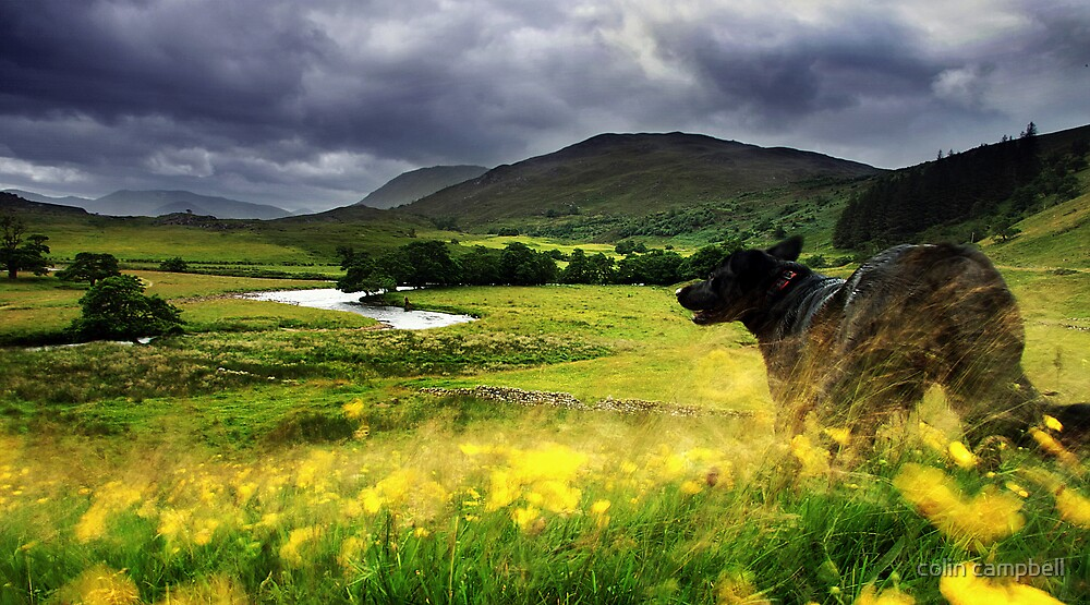 Coming down from the hill... by colin campbell