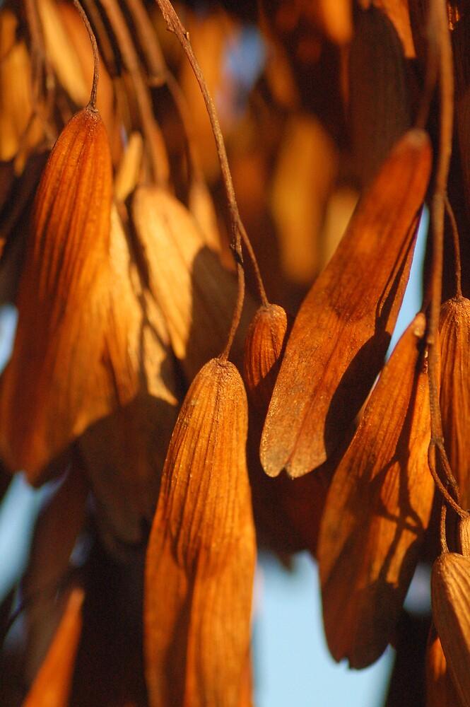 seeds by WhartonWizard
