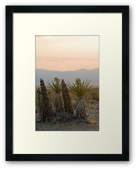Yucca schidigera by Chris Clarke