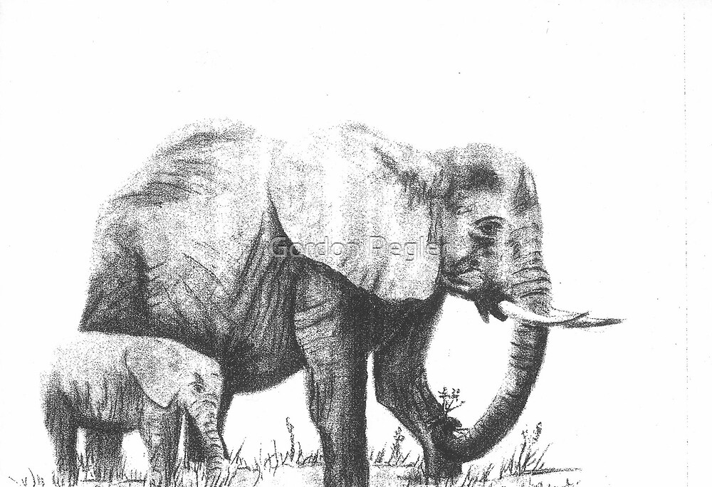 Elephant with Baby - Charcoal by Gordon Pegler