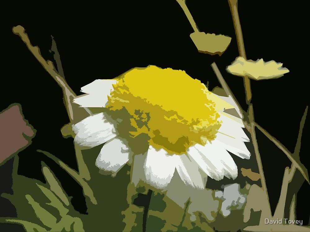 Oxeye Daisy by David Tovey