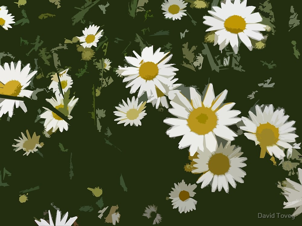 Oxeye Daisies by David Tovey