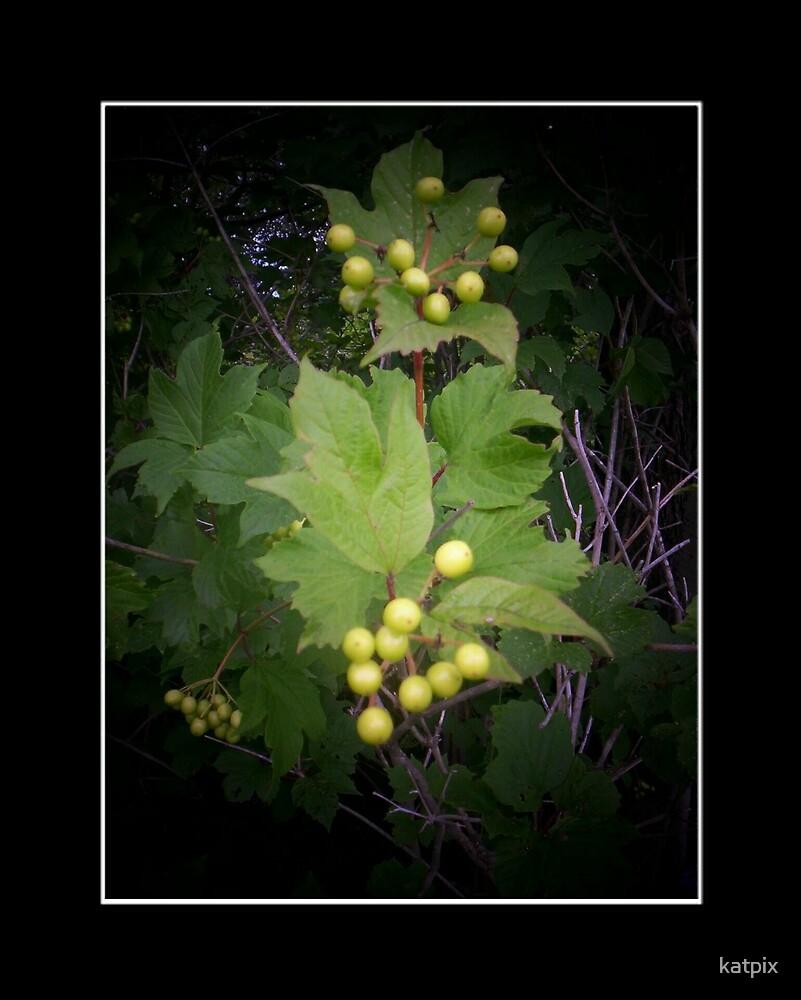 High Bush Cranberry by katpix