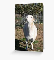 Kenny Sniffs the Breeze Greeting Card