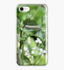 Caterpillars iPhone Case/Skin