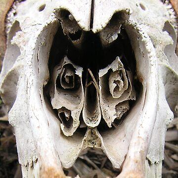 Skull Spirals by KristenJoy