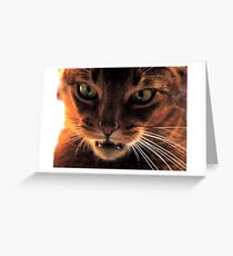 So you think I'm a domestic cat ! Greeting Card