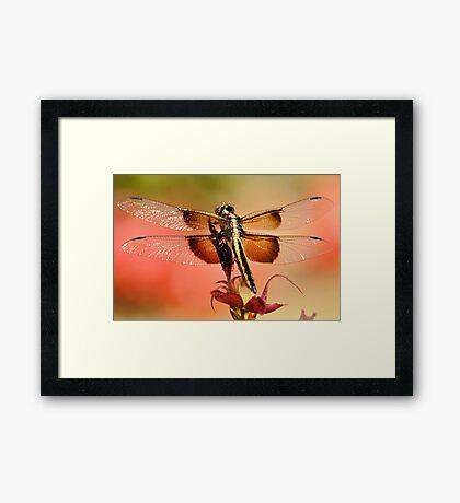 Summer Blend Framed Print