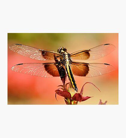 Summer Blend Photographic Print