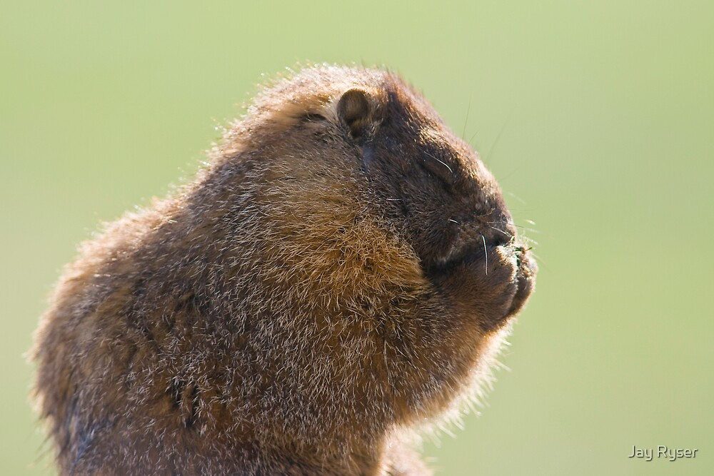 What Do Marmots Pray For? by Jay Ryser