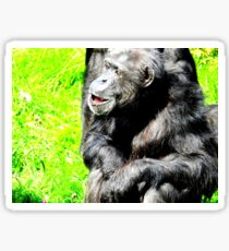 Chimpanzee Elder Sticker